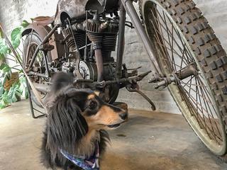 愛犬家ライダー必見!犬ってバイクに乗せてもいいの?
