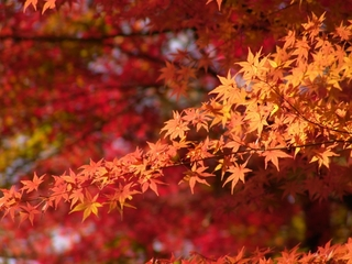 秋といえば紅葉!美しい景色に癒やされよう【関東編】
